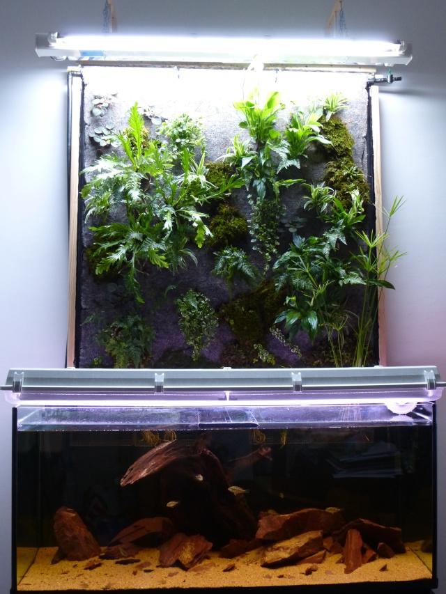 Mur v g tal sur aquarium for Mur vegetal aquarium