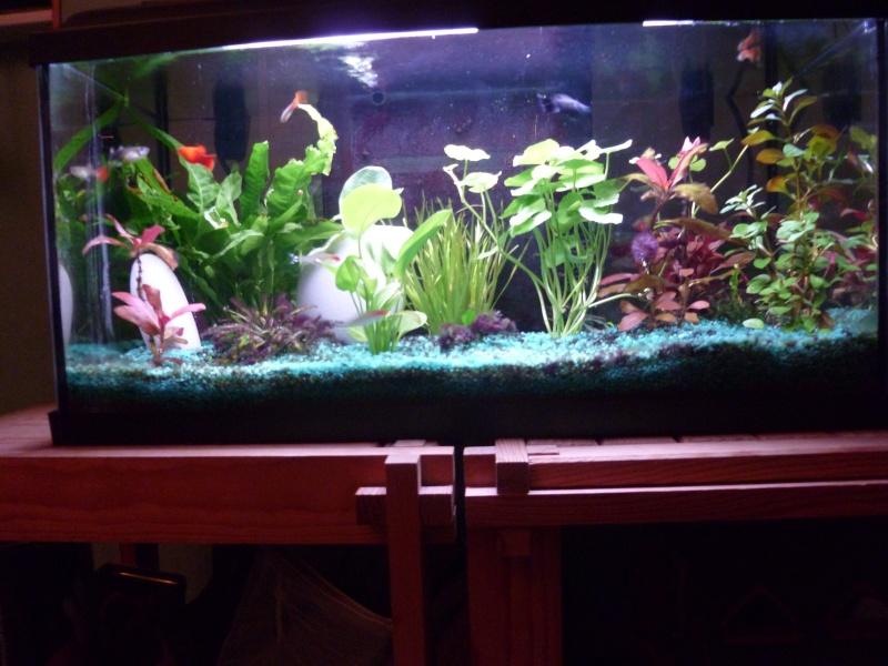 probleme d algue dans mon aquarium