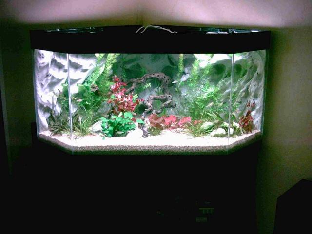 nouvel aquarium 190l