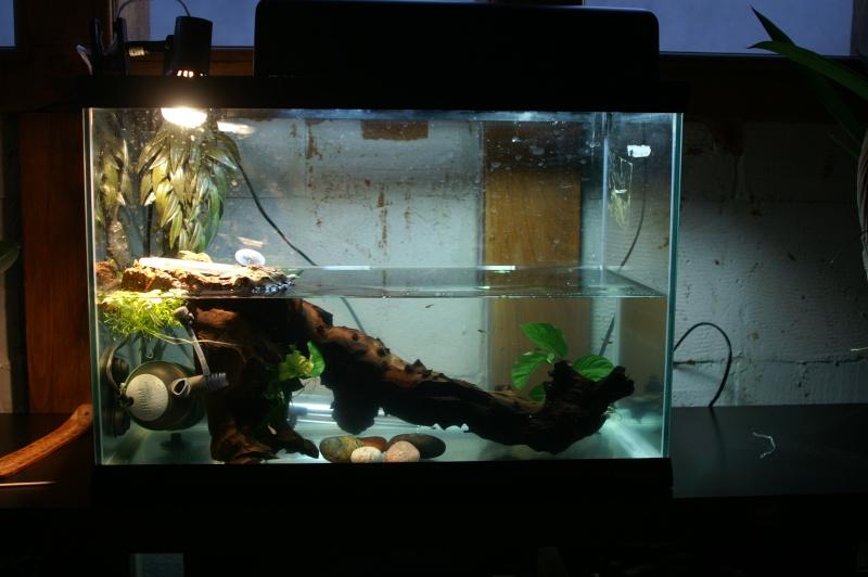 aquarium pour jeune emydura. Black Bedroom Furniture Sets. Home Design Ideas
