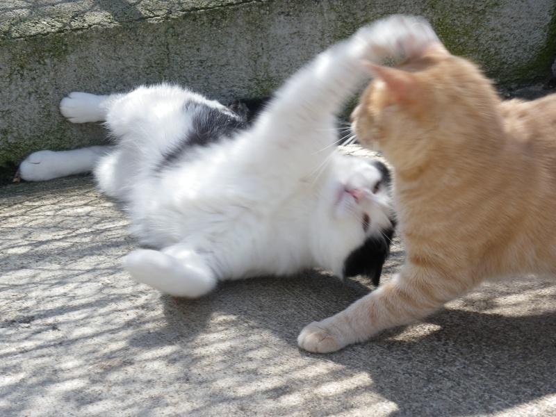 basile chat Infos pratiques sur la race de chat maine coon : personnalité, comportement, origines, soins et caractéristiques physiques du chat maine coon.