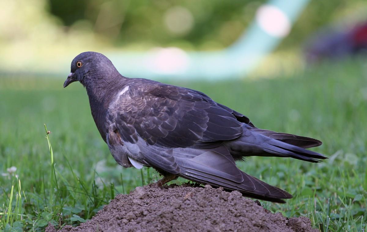 comment soigner un oiseau bless l 39 aile la r ponse est sur. Black Bedroom Furniture Sets. Home Design Ideas