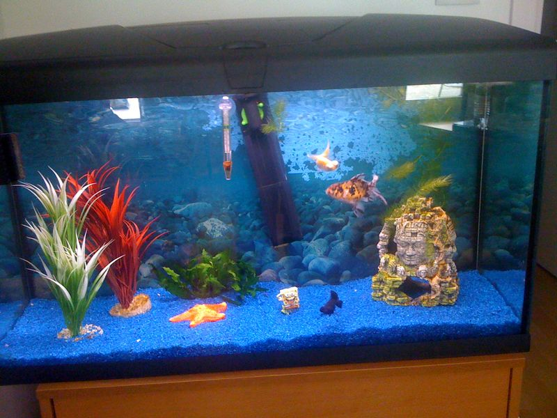 Aquarium rouge photos d aquarium page 34 animalerie en for Achat poisson rouge limoges