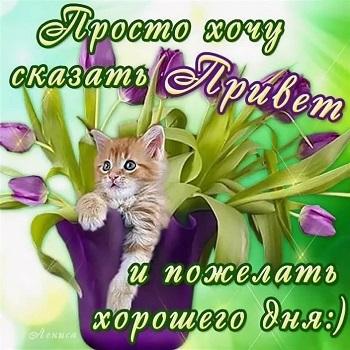 sa_aaa17.jpg